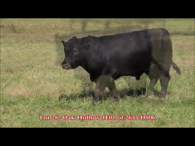 Oak Hollow Lot 28