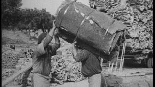 Portugal. Cork harvesting, processing and use 60 years ago.