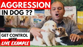 Why My Dog Is Getting Aggressive? | Get Solution With Live Example |Puppy Fighting |Baadal Bhandaari