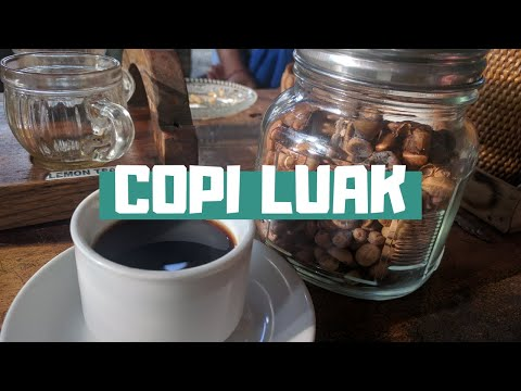 Kopi Luwak, I tasted the most expensive coffee in the world