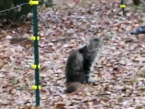 Cat Gets Shocked By Electric Fence Youtube