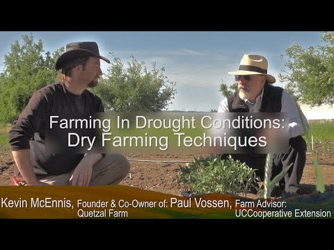 "UC Cooperative Extension -  ""Farming In Drought Conditions"" Series: Growing Dry Farm Tomatoes"