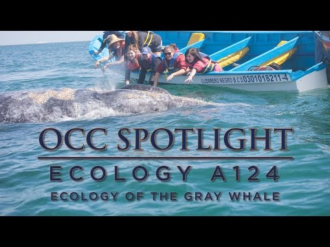 ORANGE COAST COLLEGE: Ecology of the Gray Whale