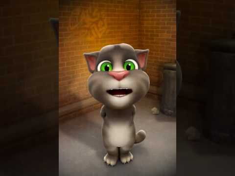 Kucing lucu bisa bilang saur