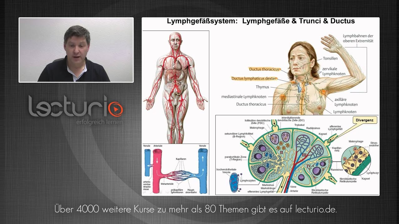 Lymphgefäße, Schädelbasisöffnungen und Ganglien | Dr. med. Steffen ...