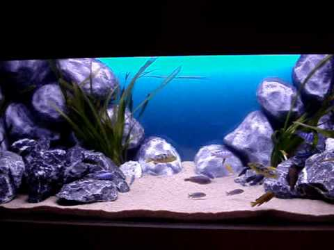 Malawi Aquarium 500 Liter (130 Gallon)