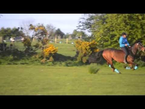 Bareback gallop goes wrong
