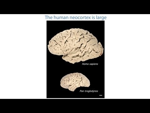 CARTA: Uniquely-Human Features of the Brain: Specialization from The Cellular to Structural Scale