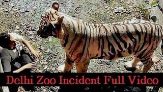 White Tiger Delhi Zoo Incident Full Video