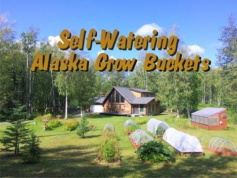 DIY Alaska Grow Buckets