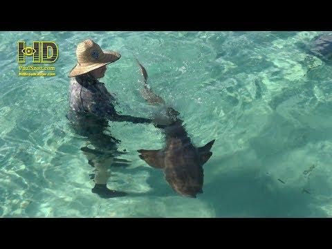 Bahamas - Lobsters, Sharks &  Rays