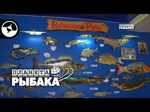 Рыбинск глазами рыболова   Планета рыбака