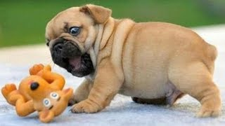 Cute is Not Enough - Funny Cats and Dogs Compilation #38