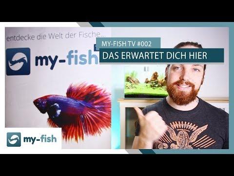 Das erwartet dich demnächst auf diesem Kanal | my-fish TV