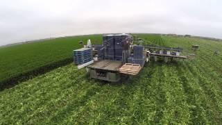 celery harvester