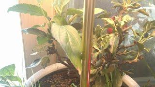 금호전기 led전구 식물제배 led로 사용 해보았습니다…