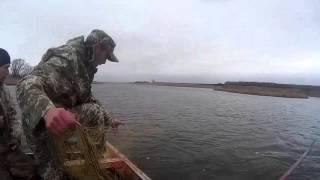 Снимаем сети на коропа ячея 110, 200 метров, Норвежская Леска  fishing with nets.