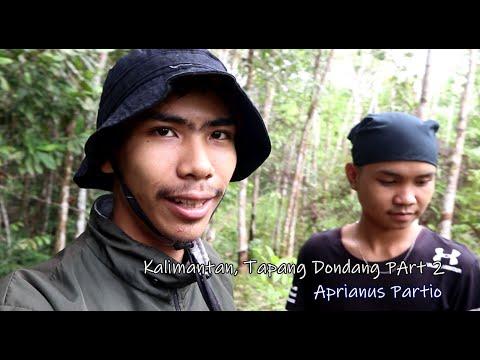 Bermalam Di Hutan Kalimantan  Tapang_Dondang Part 2  denganAprianusPartio