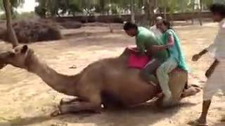 Rajasthani Girl falling from Camel II Funny Whatsapp Video 2017 II Rajasthani Culture