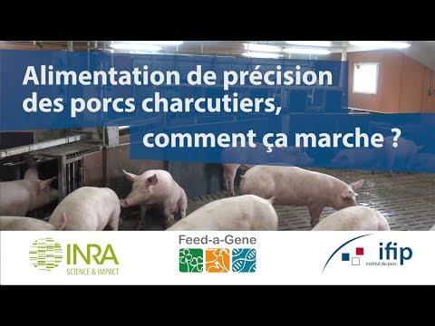 Alimentation de précision des porcs charcutiers : comment ça marche ?