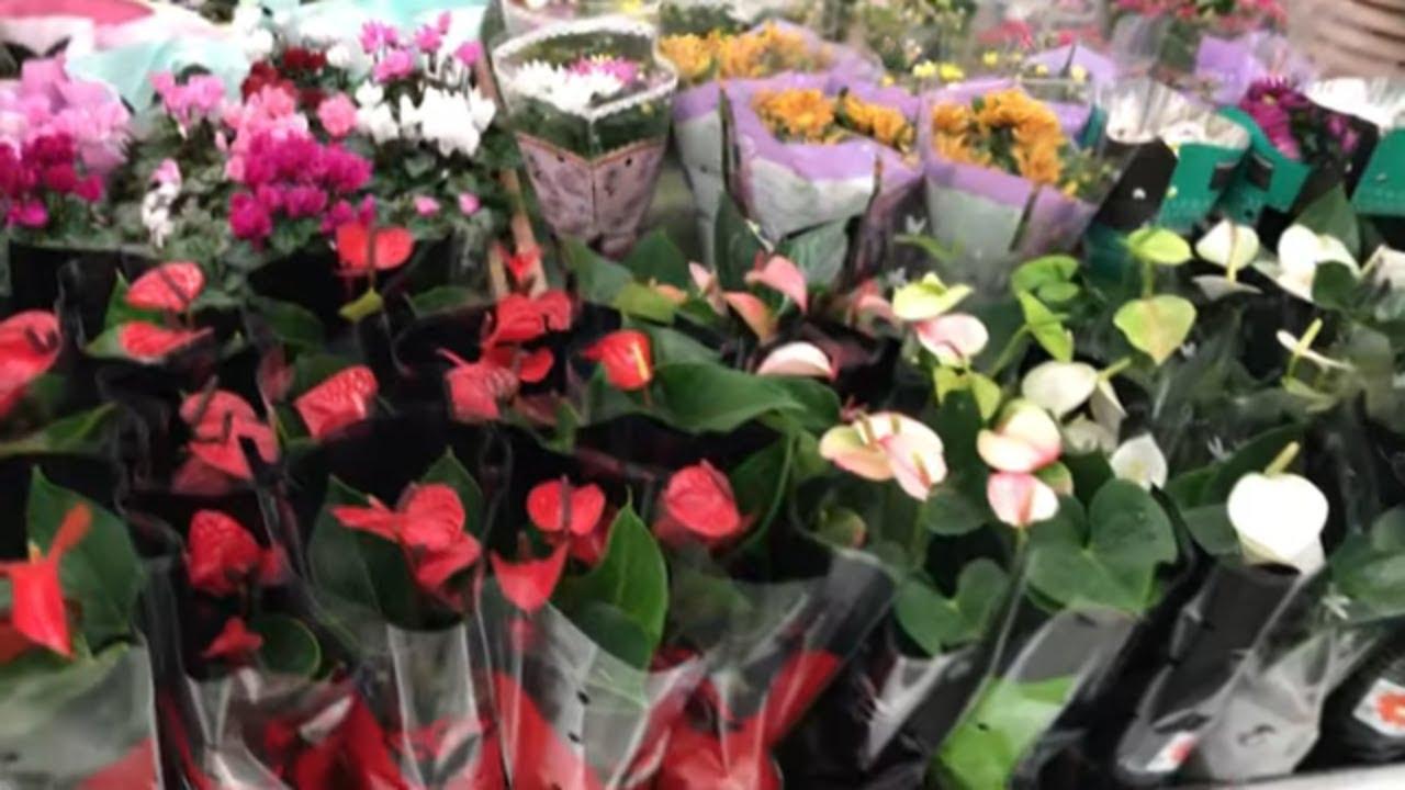 Цветочки в Леруа Мерлен. Цветы и цены.