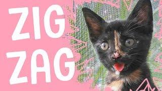MEET ZIG ZAG  The Happiest Kitten Ever!