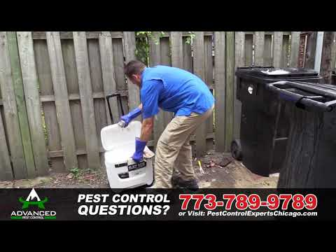 advanced-pest-control-assists-chicago's-growing-rodent-problem---rat-ice