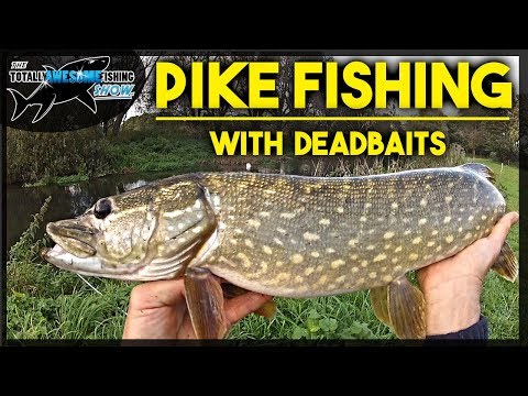 Pocket Fishing for Pike using Twitched Sprat Deadbaits