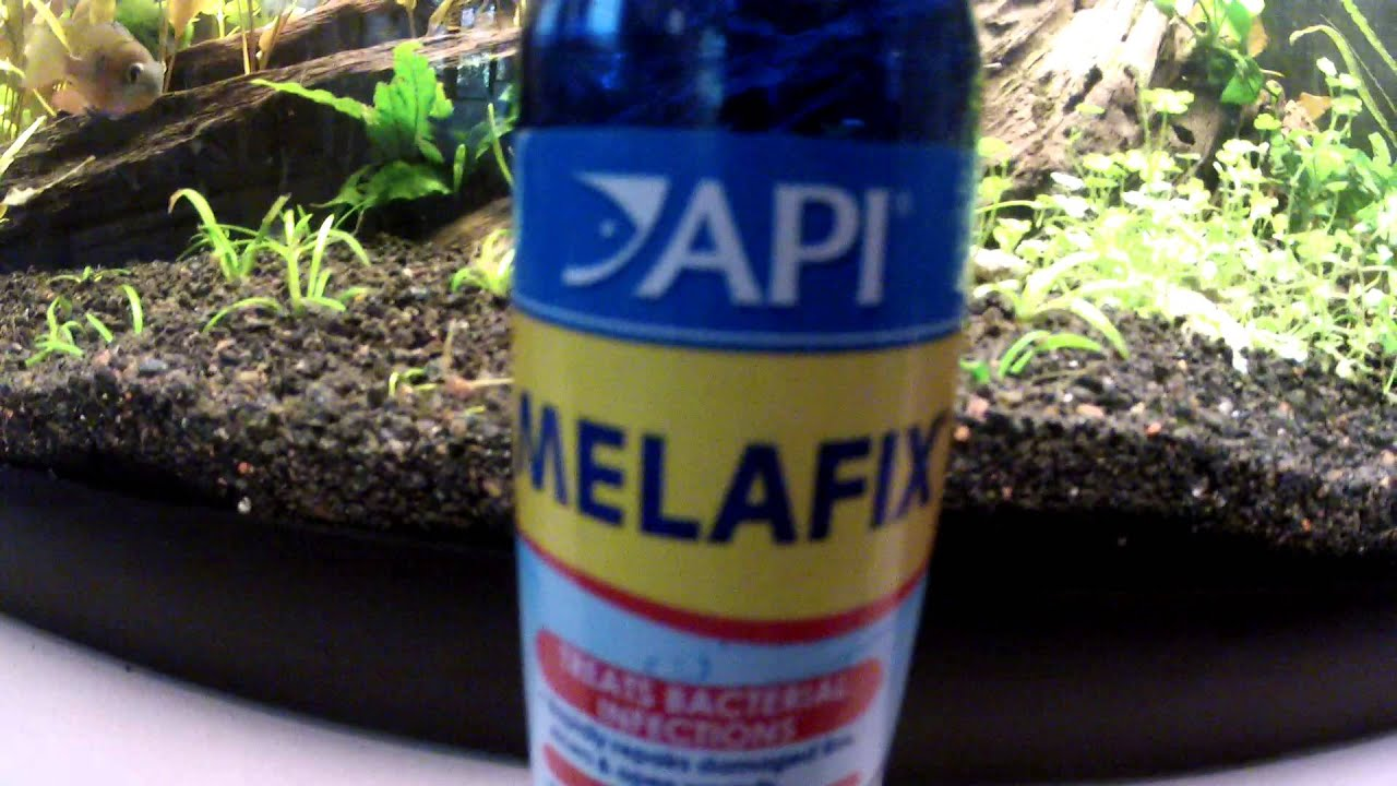 How To Use Melafix & Does It Work? | Aquascape Addiction