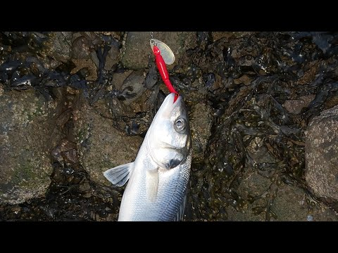 AT LAST! - Adventures Of A Hapless Plugger - Lure Fishing Carmarthenshire 25-07-2019 (Ep 17)