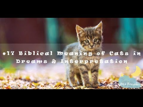 Biblical Meaning Of Cats In Dreams And Interpretation