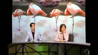 Qi - Why Do Flamingos Stand on one Leg?