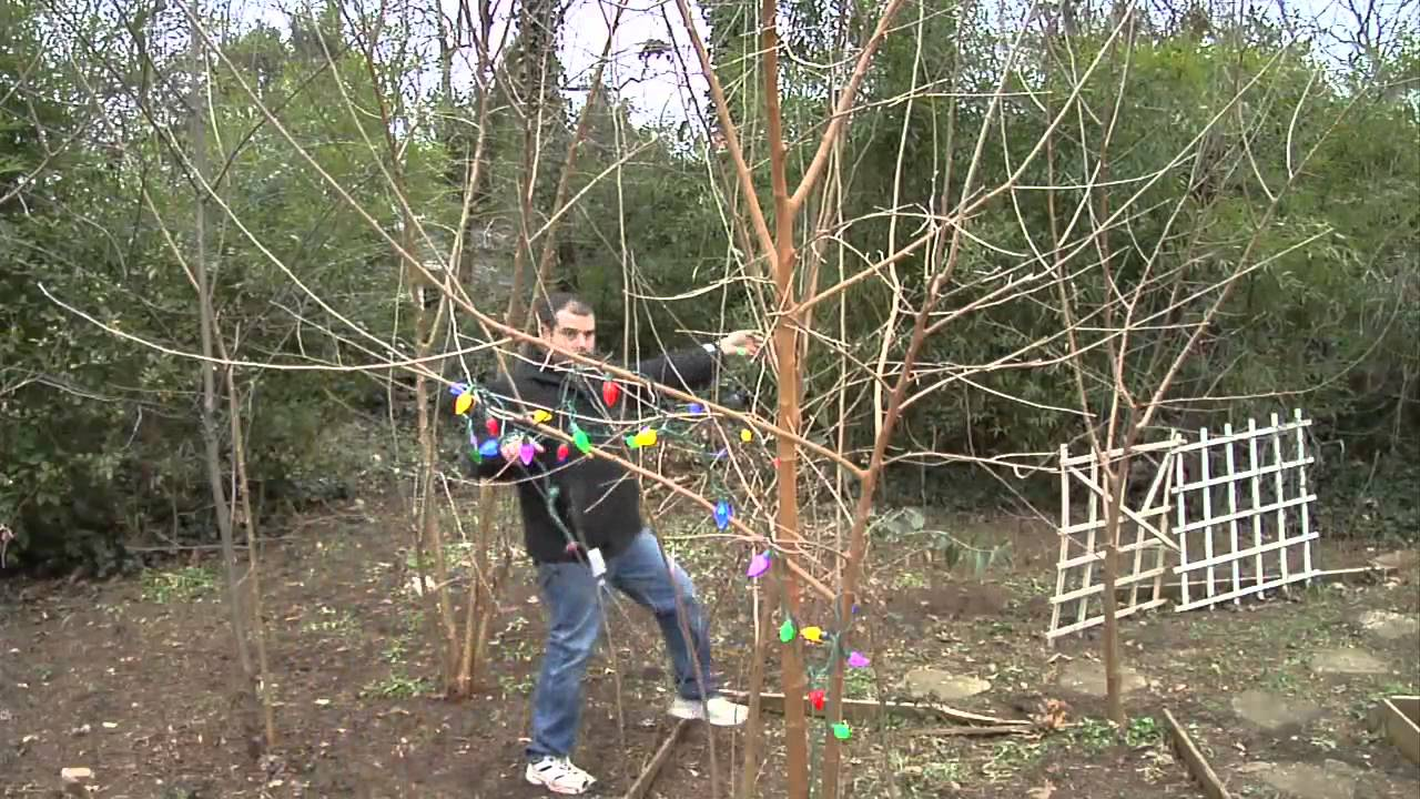 how to install christmas lights on outside trees