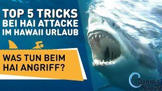 TOP 5 Tricks bei Hai Attacke im Hawaii Urlaub - Was tun beim Hai Angriff?