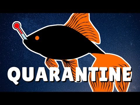 How To Quarantine New Fish In 2 Minutes | DIY Quarantine Tank | Quarantine Meds