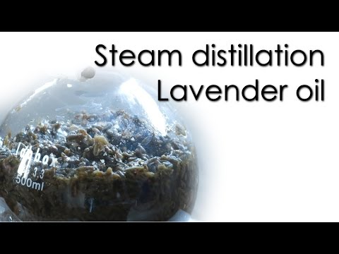 Steam Distillation - Lavender Essential Oil 🌿
