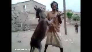 Top fokaha maroc 2016 comedie humour animaux funny جديد فكاهة حيوانات أحسن كوميديا مقالب طرائف ضحك