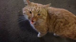 Бездомный кот говорит о своей тяжёлой жизни...