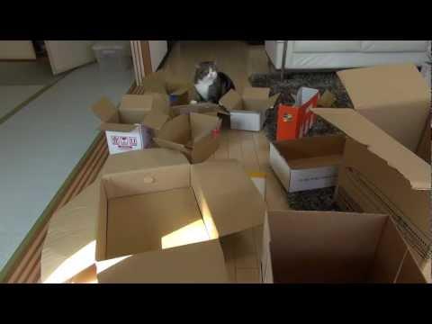 多過ぎる箱とねこ。-Too many boxes and Maru.-