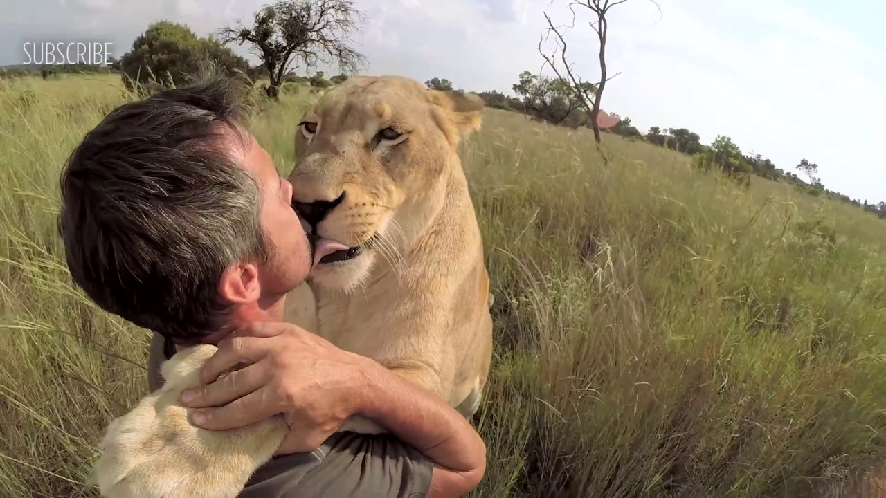 the wild hugs Lion man in
