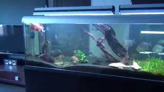 My aquarium's.