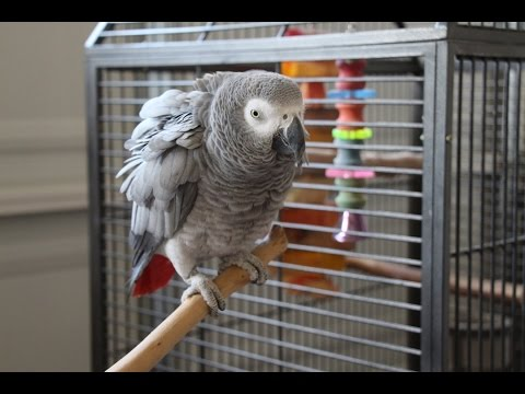 Potty Training Your Parrot