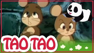 Tao Tao - 11 - השאלה הגדולה של העכבר הקטן