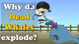 Why do Dead Whales Explode? | #aumsum #kids #education #science #whale