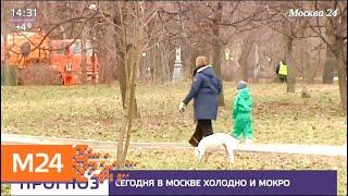 Смотреть видео Москвичей предупредили о сильном ветре в воскресенье - Москва 24 онлайн