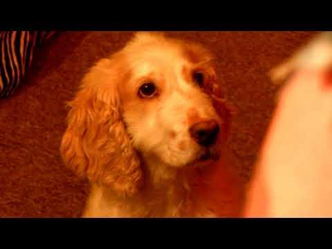 Dog Dayz, Episode: Heavy Business