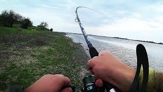 В ПОГОНЕ ЗА сазаном ВОТ ЭТО НАЧАЛО Рыбалка на Дону 2021