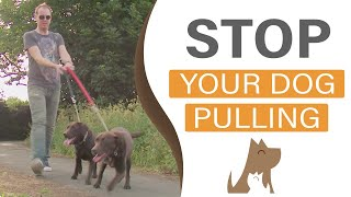 How To Train Your Dog To Heel On A Loose Leash: Dog Training In London (hd)