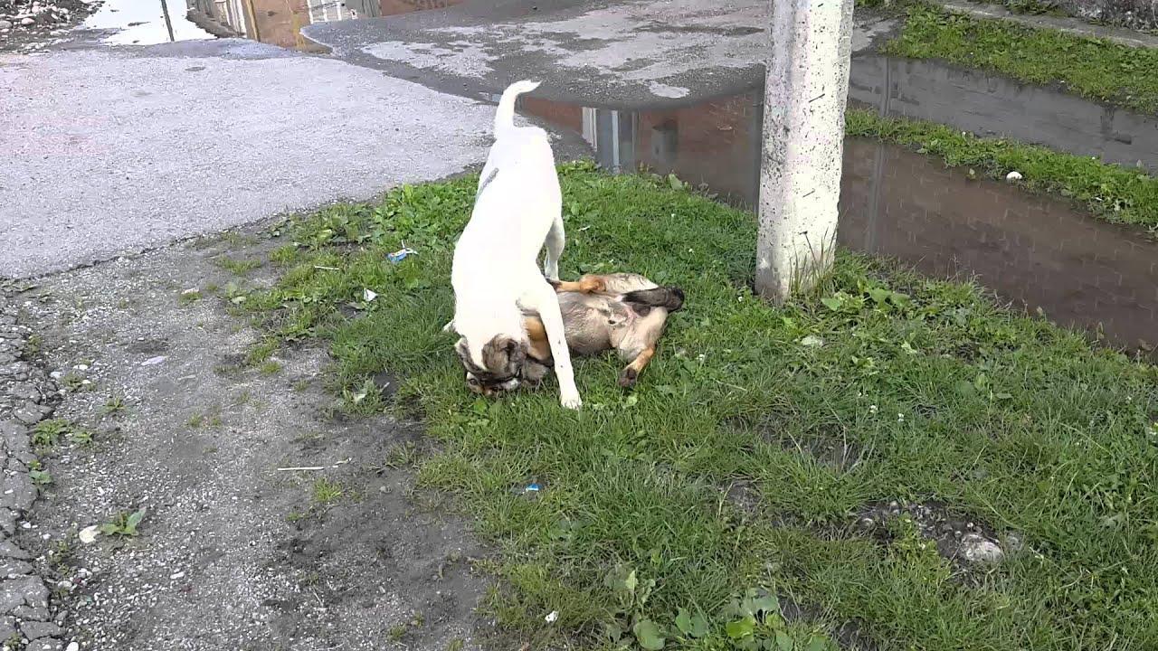 Злые собаки. Слабонервным не смотреть