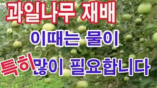 과일나무 재배 이때는 물이 특히 많이 필요합니다(과수 …